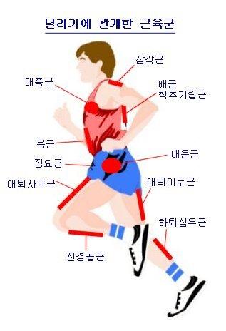 running_muscle.jpg